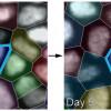 Statistical mechanics of tissue homeostasis