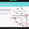 Biology Seminar by Dr. Yuri Kominami on November 27, 2020